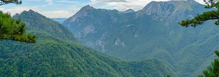 The rainforest Perućica
