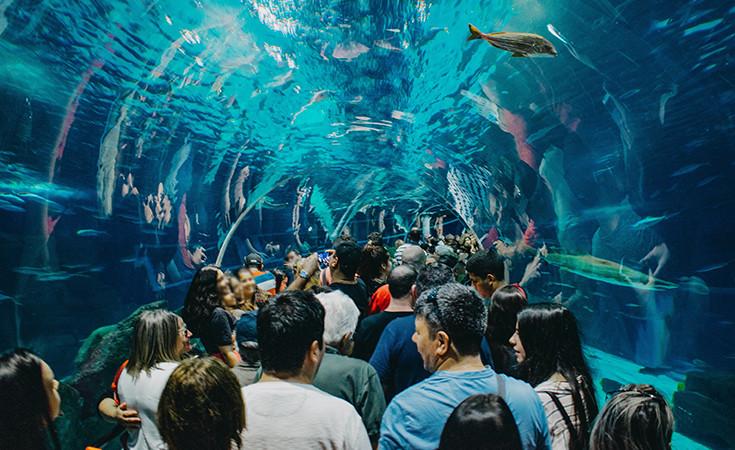 The AquaRio Aquarium