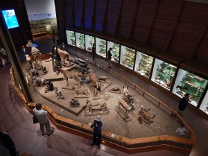 Noah's Ark exhibition at National Museum in Prague