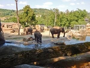 Elephant Valley pavilion at Prague's Zoo