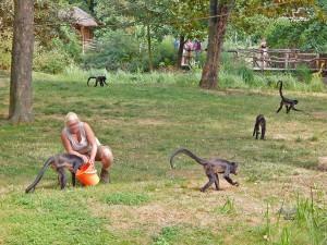 Feeding time at Prague's Zoo