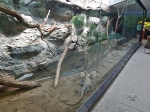Animals at Prague's Zoo