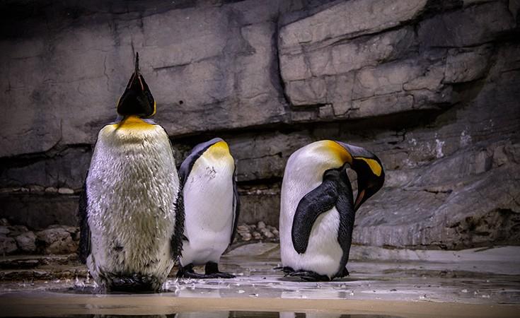 Zoološki vrt Hellabrunn u Minhenu