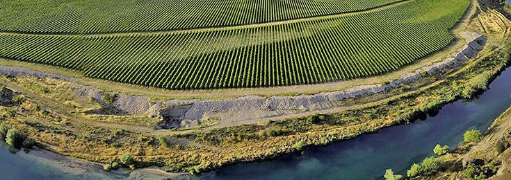 Vinograd na Ćemovskom polju