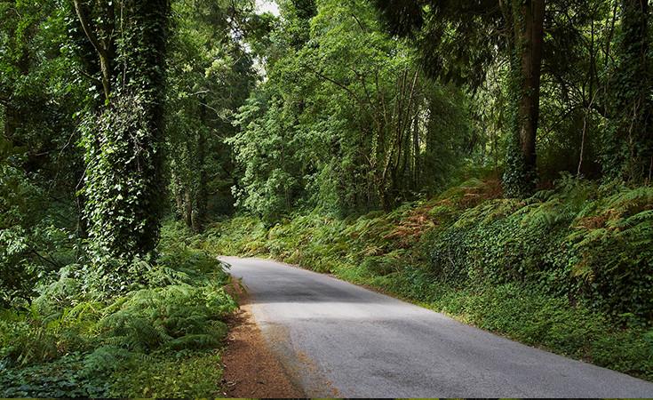 Šumski park Monsanto