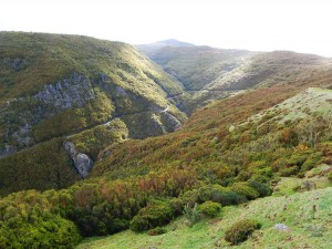Laurasilva šume pod zaštitom UNESCO-a