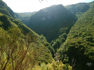 View from the Rabacal hiking trails