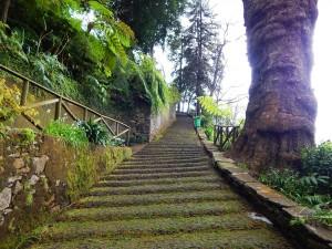 Stepenice koje vode do crkve Igreja do Monte