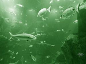 Akvarijum u gradu Porto Moniz na Madeiri