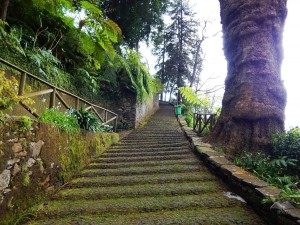 Stairs that lead to the church Monte in Funchal