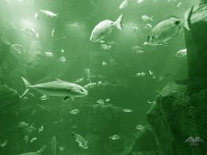Različite riblje vrste ostrva Madeire
