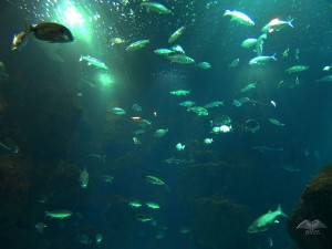 Different fish species at Aquarium in Porto Moniz