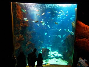 The largest fish tank at Aquarium in Porto Moniz