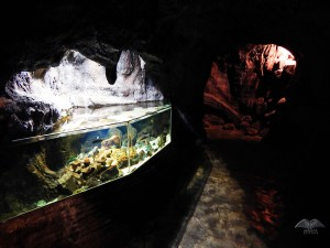 Smaller fish tanks at Aquarium in Porto Moniz