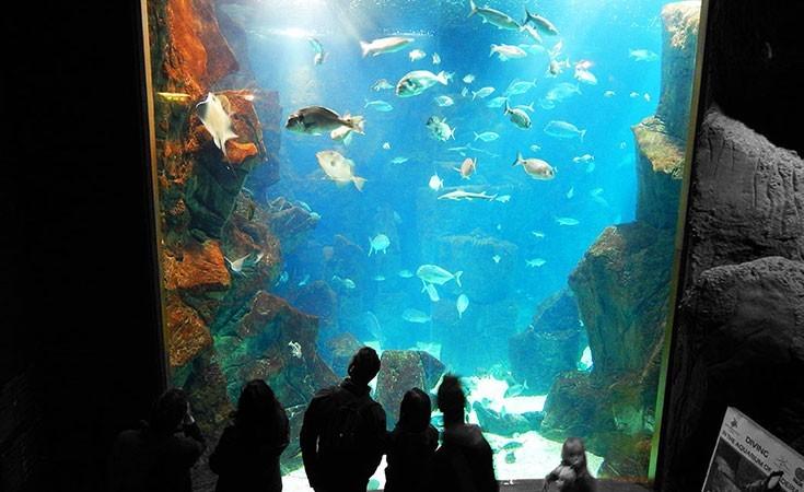 Madeira akvarijum u Porto Monižu