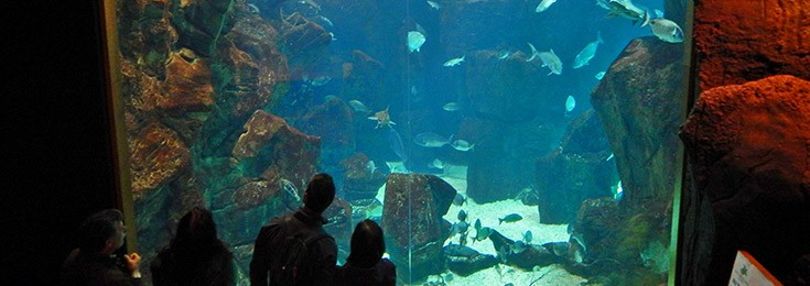 Madeira Aquarium in Porto Moniz
