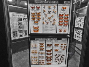 Collection of insects of the Museum of Natural History