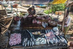 Galle fish market
