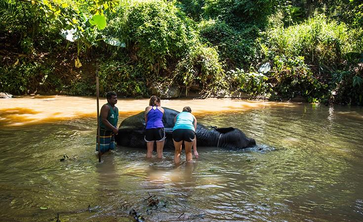 Milenium sirotište za slonove