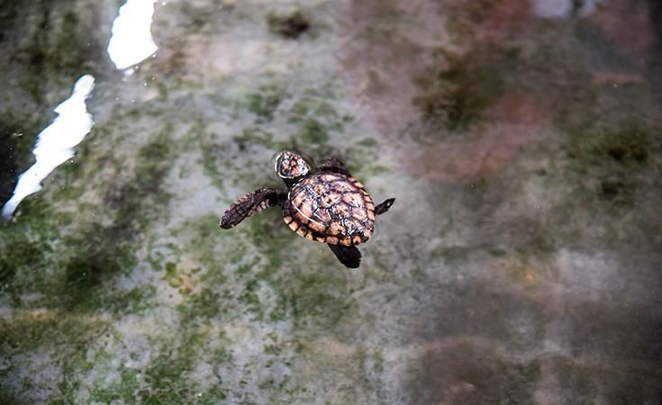 Farma kornjača u Hikkaduwa