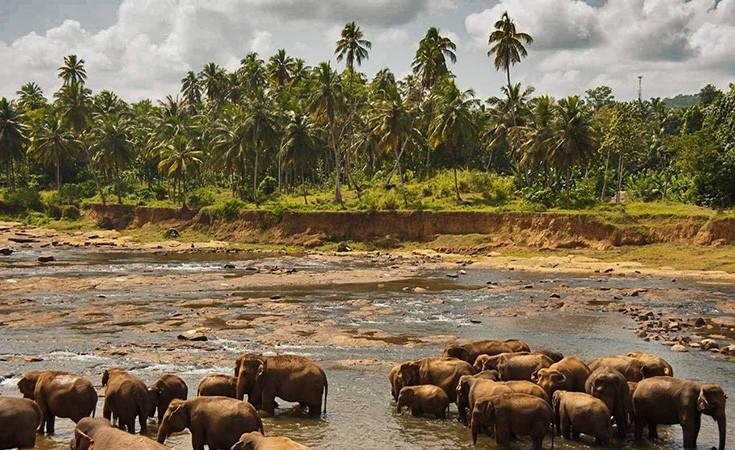 Udawalawe nacionalni park na Šri Lanci