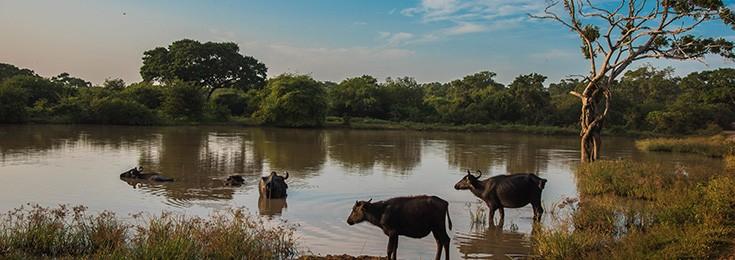 Yala Safari na Šri Lanci